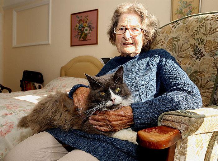 Υιοθετημένη γάτα βρίσκει την ηλικιωμένη κηδεμόνα της στο ίδρυμα