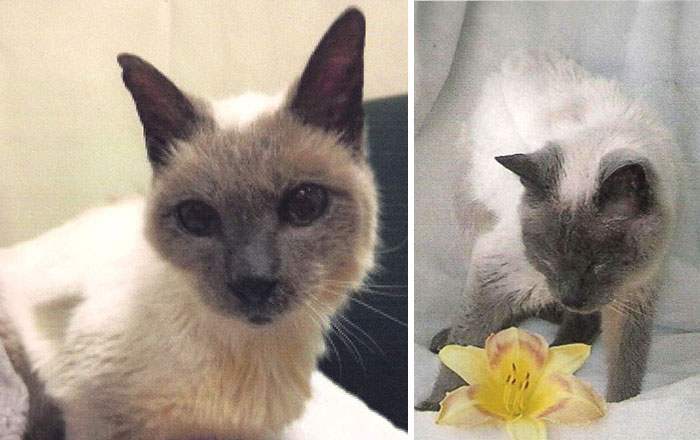 Ο 30χρονος Scooter ανακηρύσσεται ως ο γηραιότερος γάτος