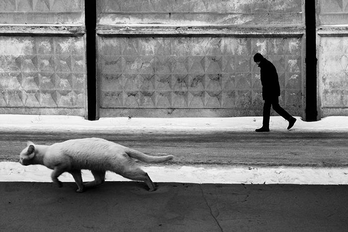 Ο κρυφός κόσμος των αδέσποτων γατών του Καζακστάν