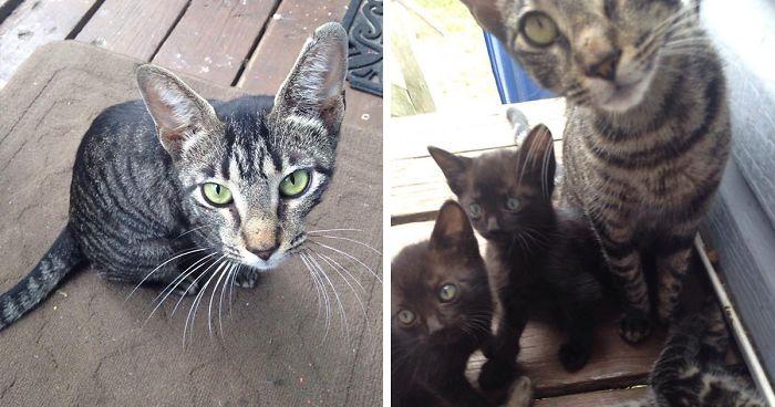 Ένας πατέρας και ο γιός του χάιδεψαν μια αδέσποτη γάτα και αυτή επέστρεψε με μια έκπληξη την επόμενη μέρα