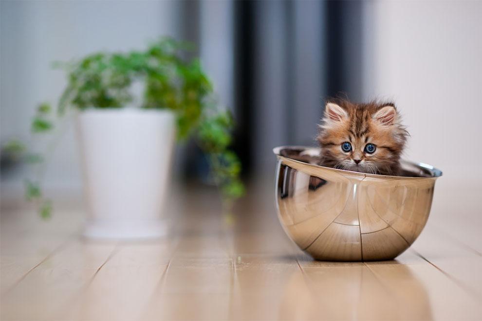 Γνωρίστε την Daisy, το πιο γλυκό γατάκι του κόσμου