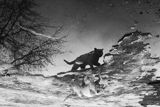 Μια φωτογράφος καταγράφει την κρυφή ζωή των γάτων στο Καζακστάν